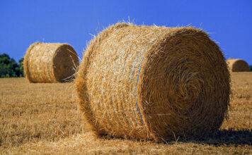 Jak pozyskać informacje o różnych preparatach rolniczych